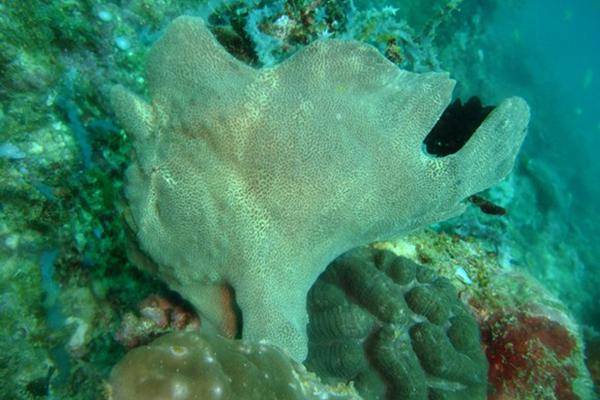Balinghay,diving spot,boracay