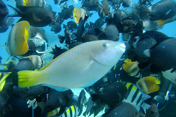 laguna de boracay,diving spot,boracay